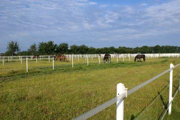 Koppel - Equestrian Centre Austria