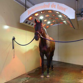 Solarium - Equestrian Centre Austria