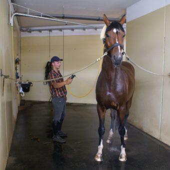 Waschplatz - Equestrian Centre Austria