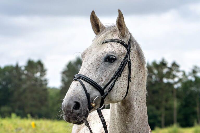 Salz der Erde K - Equestrian Centre Austria