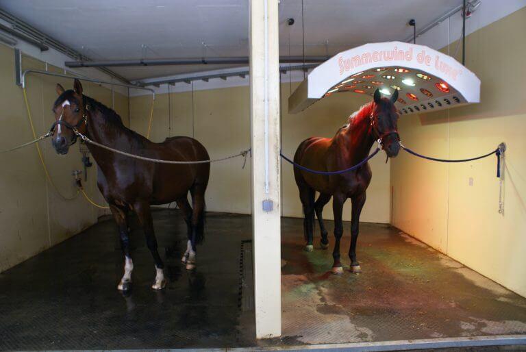 Waschplatz & Solarium - Equestrian Centre Austria